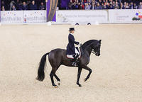 16-44-d4294b-Susan-Pape-GBR-Harmony's-Don-Noblesse