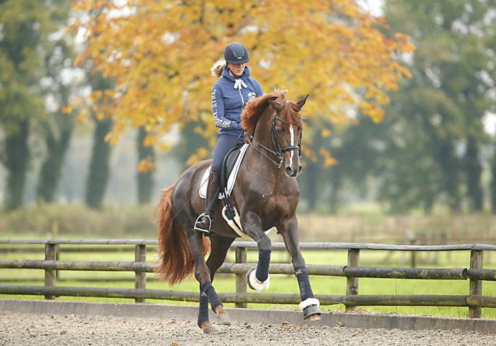15-42-d0518b-Tessa-Frank-Fuerst-Nymphenburg-Training